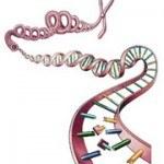 Đột biến gen là gì? Có ảnh hưởng kết quả xét nghiệm ADN?