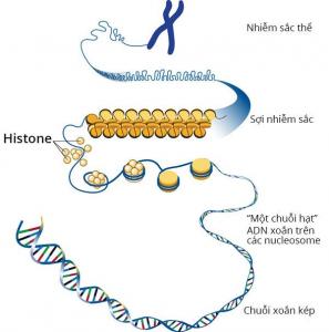 ADN không phải là vật chất di truyền duy nhất