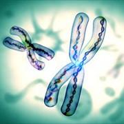Telomere là những đoạn ADN ở cuối các nhiễm sắc thể