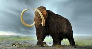 Voi ma mút đã tuyệt chủng cách đây 3600 năm