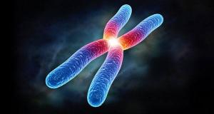 Các nhà khoa học đã tìm ra nguyên nhân tại sao nhiễm sắc thể X lại quá khác biệt so với các nhiễm sắc thể khác