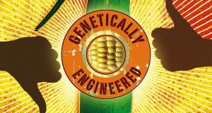 GMO: Thực phẩm biến đổi gen – Phần 2